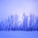 Trees, Kincaid Park, Anchorage, Alaska - Graflex Crown Graphic 4x5 Press Camera - Film - Janeiro 2004