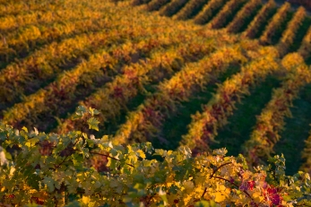 Prince Michel Vineyard, Charlottesville, Virginia - Canon EOS 5D - Digital - November 2008