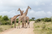 IMG_0008-Giraffe