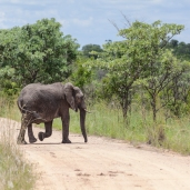 IMG_0267-African-Elephant