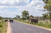 IMG_0367-African-ElephantCape-Buffalo