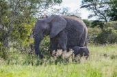IMG_0463-African-Elephant