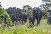 IMG_0464-African-Elephant
