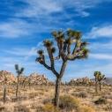 Joshua Tree National Park, California - Canon EOS 20D - Digital - March 2007