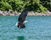 IMG_8785-African-Fish-Eagle