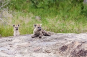 IMG_9939-Spotted-Hyena