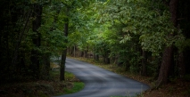 Lambs Road 1